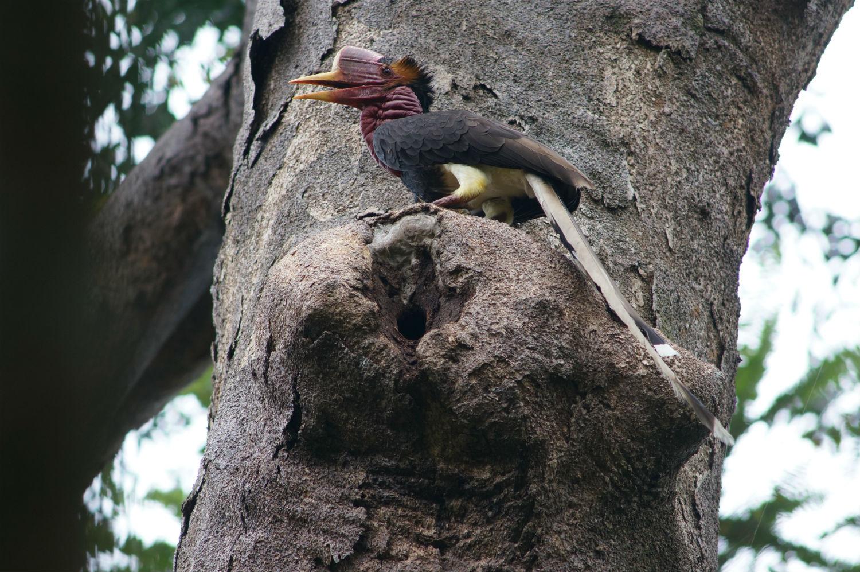 นกชนหิน สัตว์ป่าสงวนอันดับที่ 20